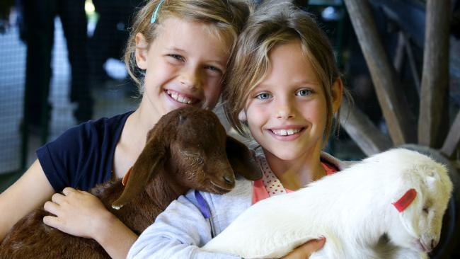 CAIRNS KIDS ANIMAL FARM